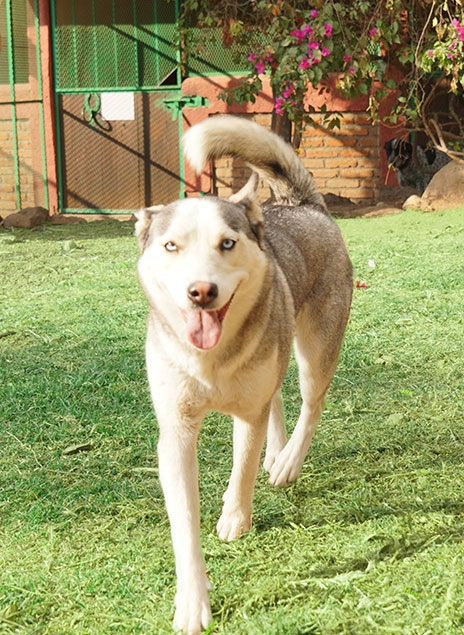 http://mascotel.com.mx/wp-content/uploads/2018/06/Mascotel-hotel-guarderia-no-pension-mascotas-perros-morelia-faq1-464x635.jpg