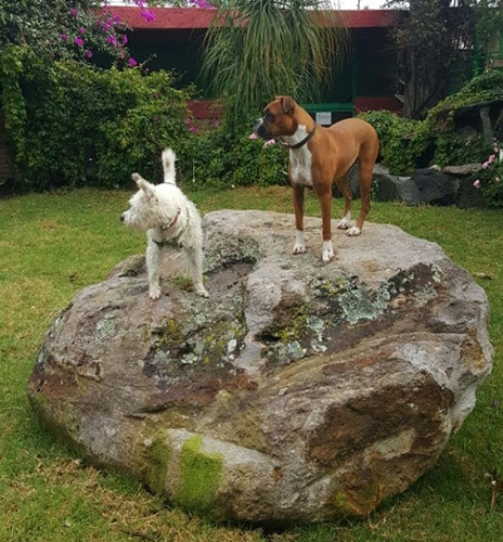 http://mascotel.com.mx/wp-content/uploads/2018/06/Mascotel-hotel-guarderia-no-pension-mascotas-perros-morelia-faq2-464x500.jpg