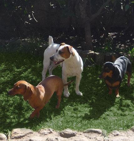 https://mascotel.com.mx/wp-content/uploads/2017/04/Mascotel-hotel-guarderia-no-pension-mascotas-perros-morelia-idiomaperro-428x450.jpg