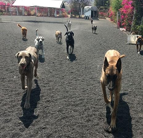 https://mascotel.com.mx/wp-content/uploads/2018/06/Mascotel-hotel-guarderia-no-pension-mascotas-perros-morelia-nosotros-464x450.jpg