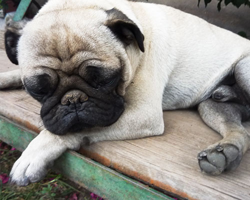 Mascotel-hotel-guarderia-no-pension-mascotas-perros-morelia