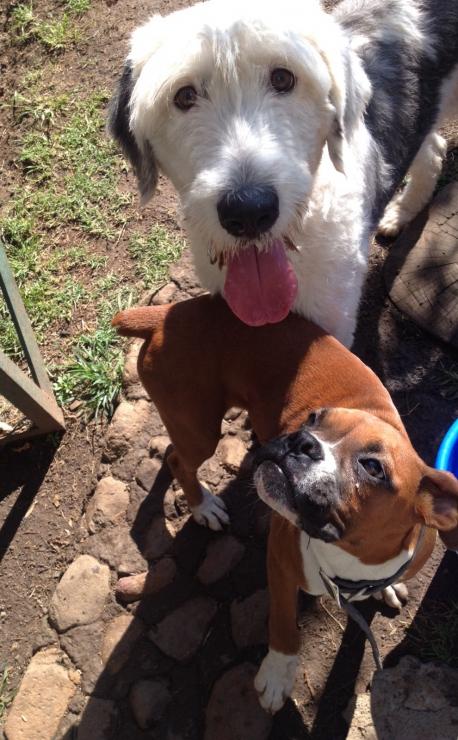 https://mascotel.com.mx/wp-content/uploads/2018/07/Mascotel-perros-hotel-guarderia-campestre-mascotas-2-458x740.jpg
